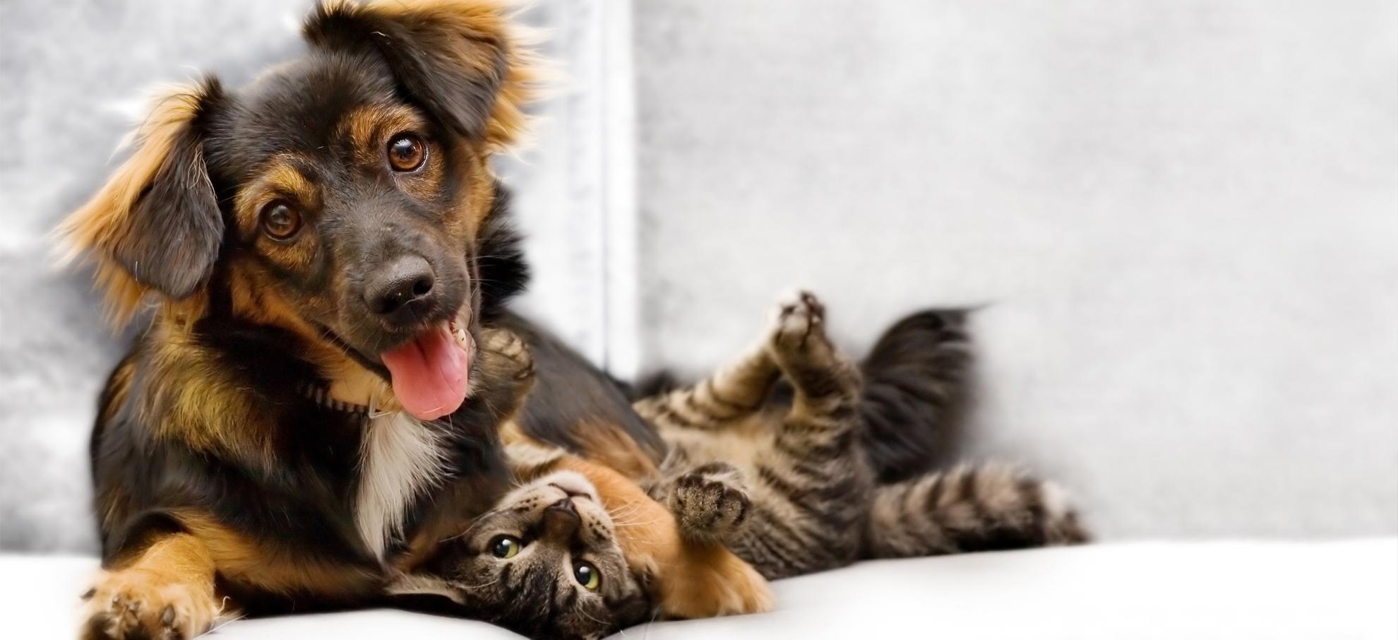 Een volledige verzorging voor uw huisdier